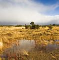 Tasmanian Storm  by Mike  Dawson