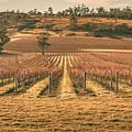 Tasmanian Winery In Winter by Jorgo Photography - Wall Art Gallery