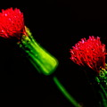 Tassel Flower by Roberto Aloi