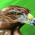 Tawny Eagle by Jennifer Phillip