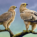 Tawny Eagles by Anthony Mwangi