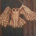 Tawny Owl In Flight by Joann Renner