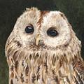 Tawny Owl by Tonya Butcher