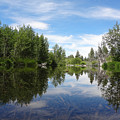 Taylor Creek Reflections by Kristina Lammers