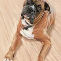 Taz My Best Friend by Vanda Luddy