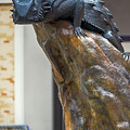 Tcu Horned Frogs 11316 by Rospotte Photography