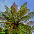 Te Puia Palm Tree by Roberta Bragan