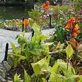 Tea Garden At San Antonio Zoo Crosswalk by Connie Young