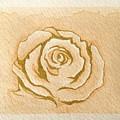 Tea Rose by Jaime Violano