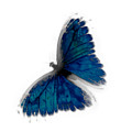 Butterfly Blur In Teal Blues by Heather Joyce Morrill