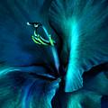 Teal Gladiola Flower by Jennie Marie Schell