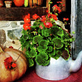Teapot Filled With Geraniums by Susan Savad