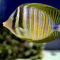 Technicolor Fish by Madeline Ellis