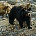Teddy Bear by Dennis Bolton