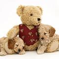 Teddy Bear With Puppies by Jane Burton