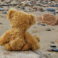 Teddy On A Beach by Ludmila SHUMILOVA