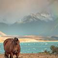 Tekapo Horse by Chris Cousins