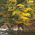 Tellico River  by Harold Stinnette