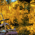 Telluride Spirituality - Colorado - Autumn Aspens by Jason Politte