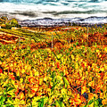 Temecula Vineyard by Stefan H Unger
