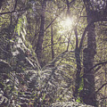 Temperate Rainforest Canopy by Jorgo Photography - Wall Art Gallery