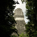 Temple In The Trees Tikal Guatemala by John  Mitchell