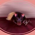 Templeton The Pet Fancy Rat by Becky Herrera