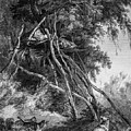 Temporary Tree Dwelling by Douglas Barnett