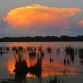 Ten Thousand Islands Florida by David Lee Thompson