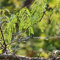 Tender Green by Aaliyah Muhammad