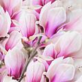 Tender Magnolia Flowers by Anastasy Yarmolovich