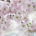 Tender Spring Pastels by Jenny Rainbow
