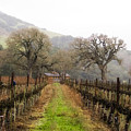 Tending The Grapes by Lynn Andrews