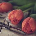 Tending The Tulips by Teresa Wilson