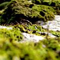 Tennesee Moss by Sarah Houser