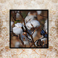 Tennessee Cotton II Photo Square by Jai Johnson