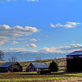 Tennessee Farm by Judy Baird