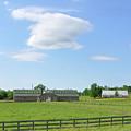 Tennessee Farm by Wanda-Lynn Searles
