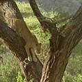 Terengeti Lioness by Joseph G Holland