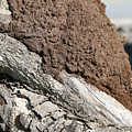 Termite Nest by Steve Madore