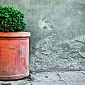 Terracotta Flower Pot On Sidewalk by Emilio Lovisa