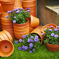 Terracotta Flower Pots by Sophie McAulay