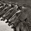 Terracotta Horses by Joe Bonita