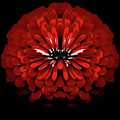 Test Red Abstract Flower 3 by Heather Joyce Morrill