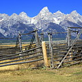 Teton Corral by Marty Koch