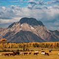 Teton Horse Ranch by Darren White