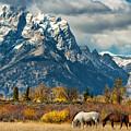 Teton Horses by Kathleen Bishop