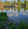 Teton Reflection In Schwabacher Landing by Ray Mathis