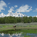 Teton Reflection With Buffalo by George Sanquist