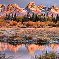 Teton Reflections Amonth The Willows by Adam Jewell